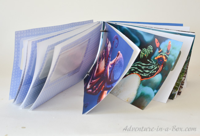 Peek-a-Boo Book from Envelopes