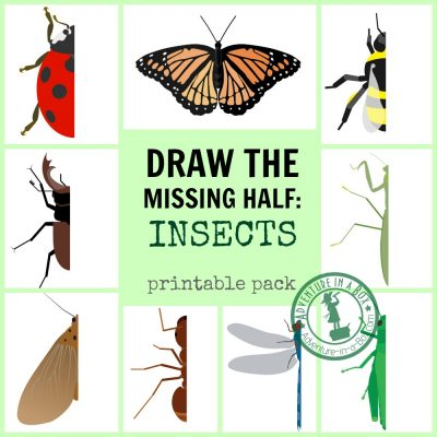 Insect Drawing Prompt Printables - Draw the Missing Half - FB