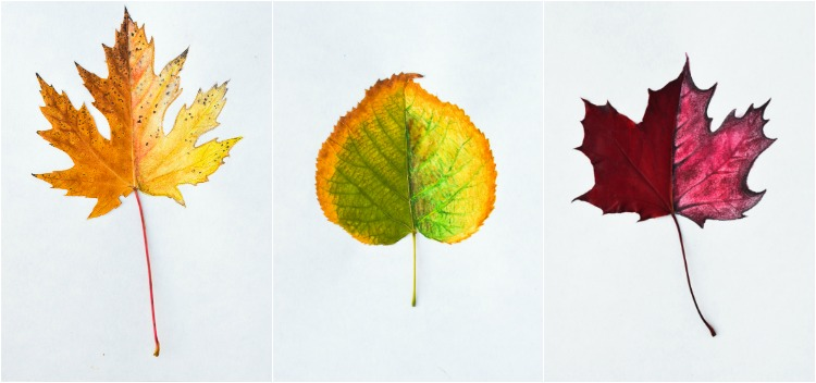 Autumn Leaf Art Prompt