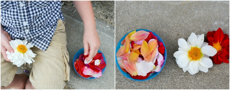 Flower Petal Canning: Depetalling in progress.